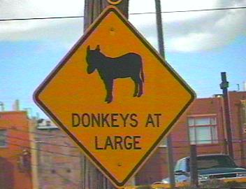 Donkeys At Large in Cripple Creek, CO!